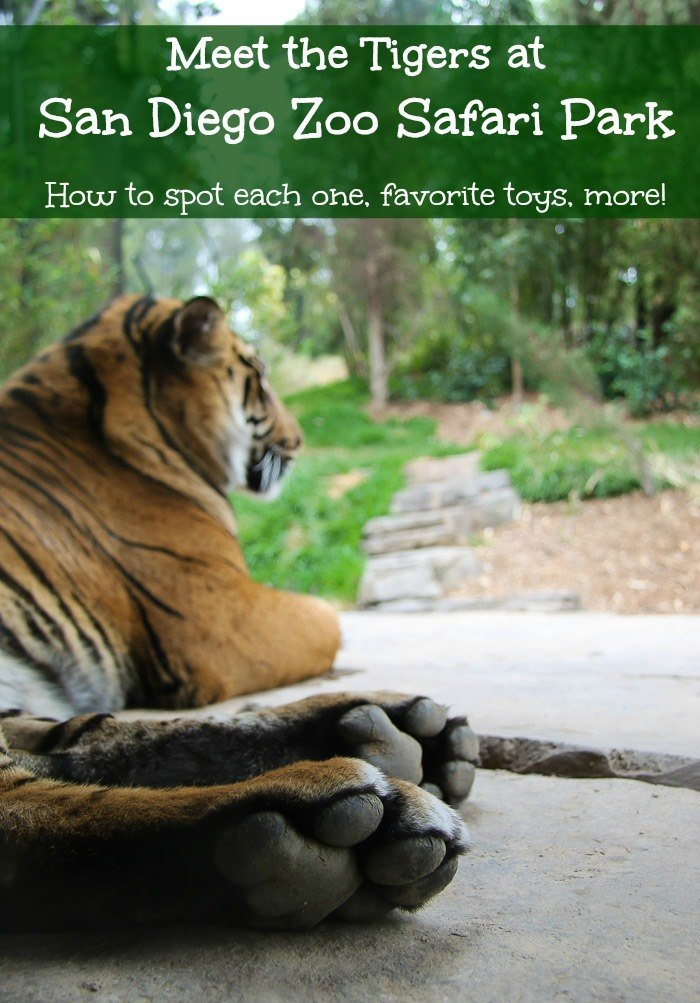 san diego zoo safari park tiger trail