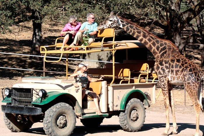 things to do in sonoma with kids safari west