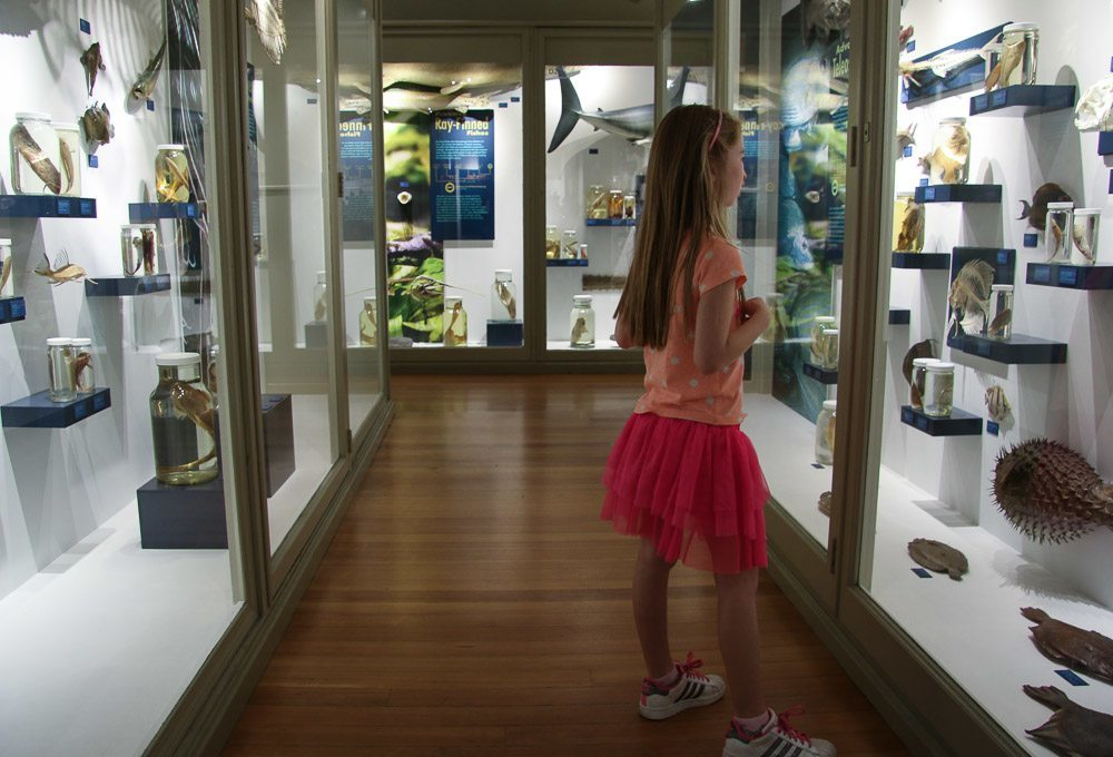 harvard museum of natural history with kids