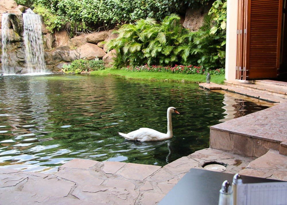 hyatt regency maui resort spa swan breakfast