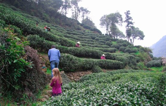 A Private Longjing Tea Village Tour in Hangzhou