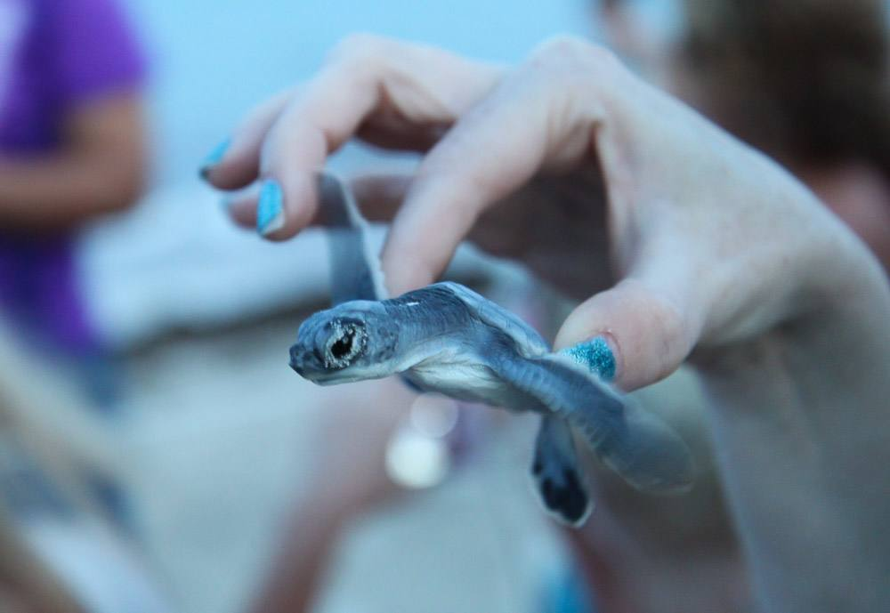 Experience Eco-Tourism Via Sea Turtle Releases in Mexico