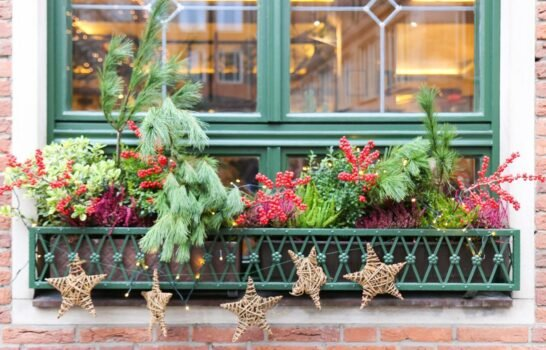 The Christmas Window Boxes of Germany