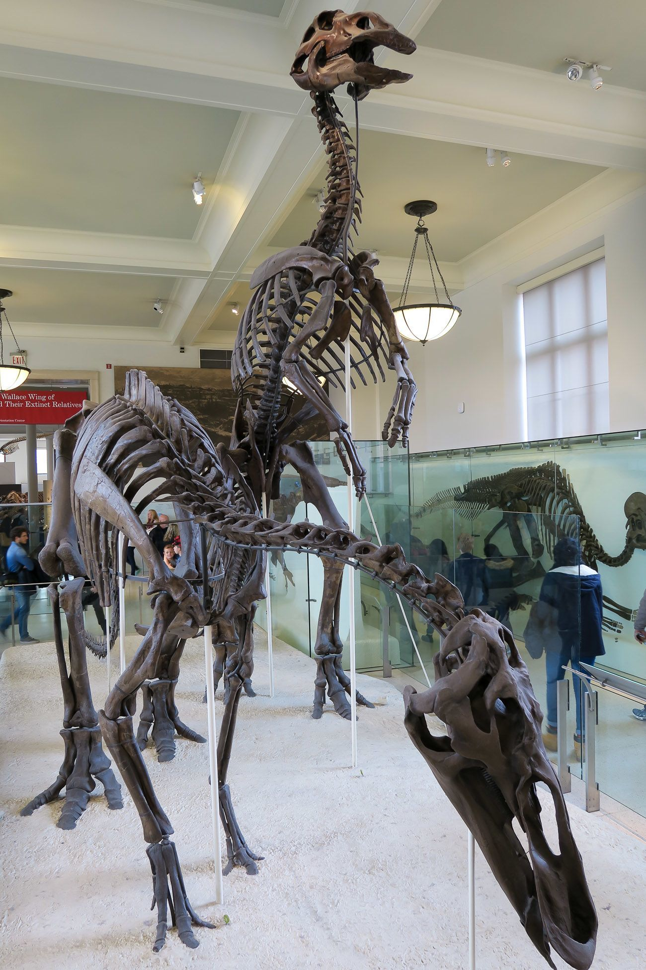 Visit the American Museum of Natural History in New York City with kids