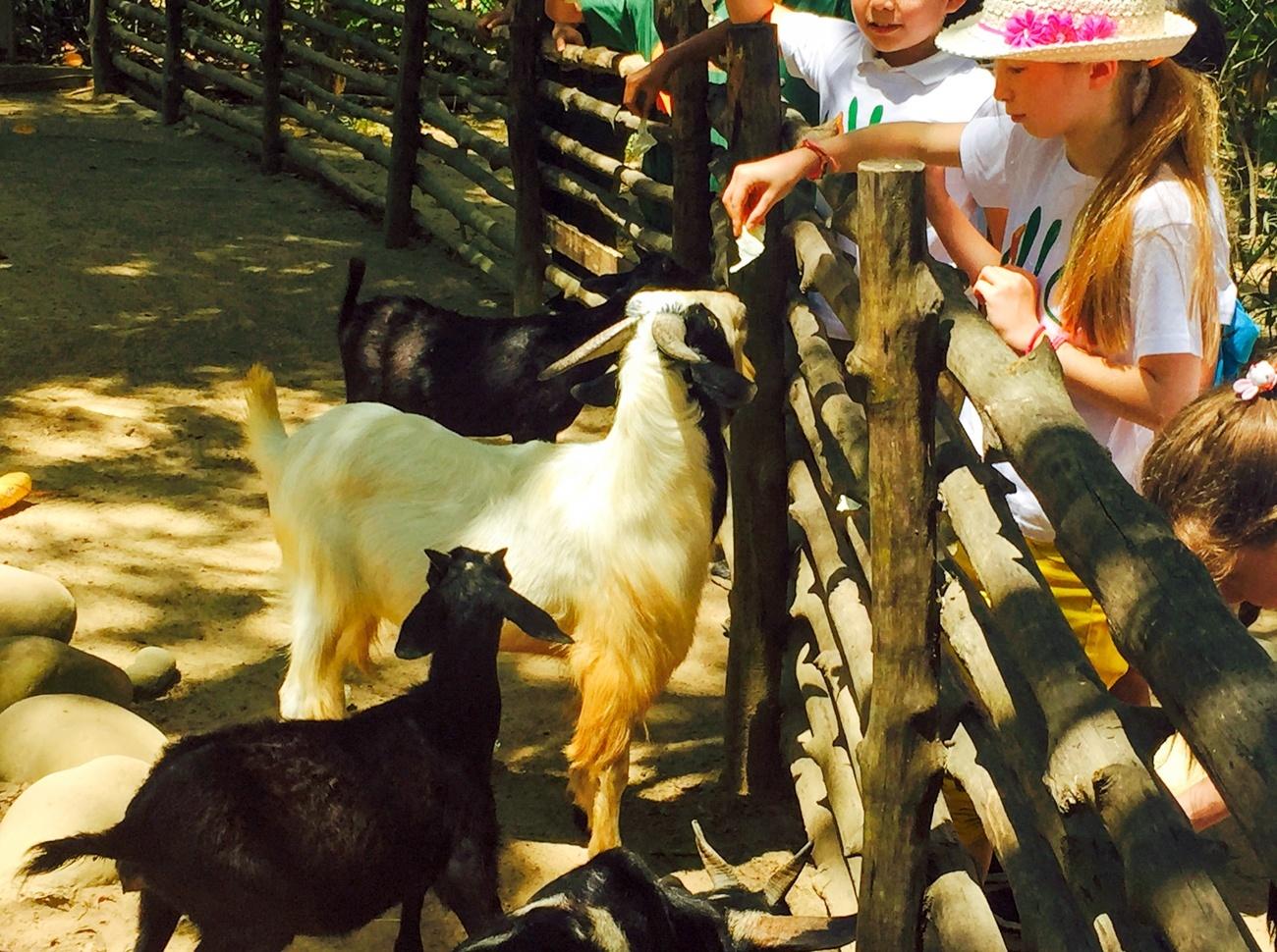 Shangri-la Rasa Ria Resort Nature Reserve animals