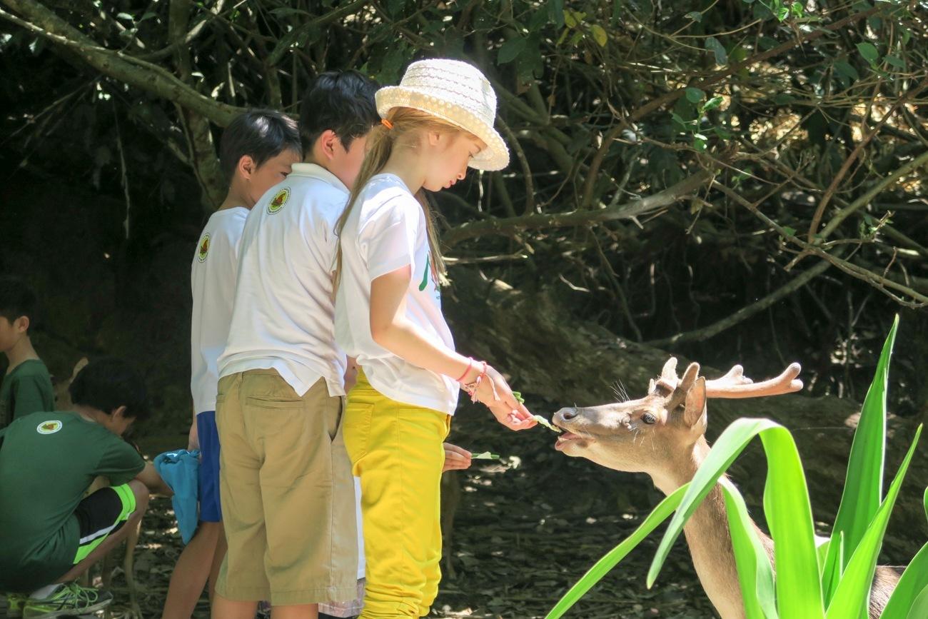 Deer feeding at Shangri-la Rasa Ria Resort Nature Reserve