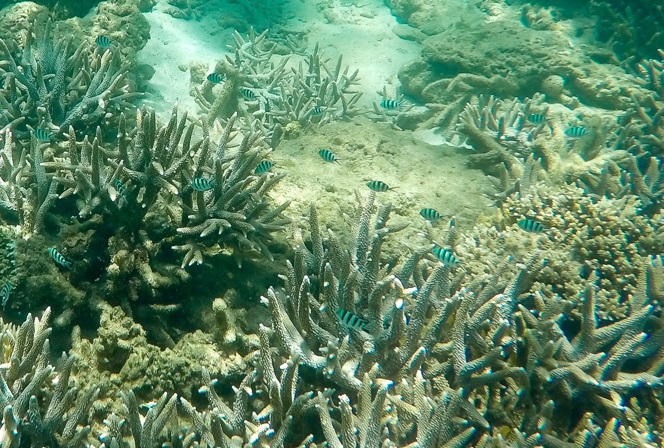Tropical fish along coral reefs of Mamutik Island, Borneo