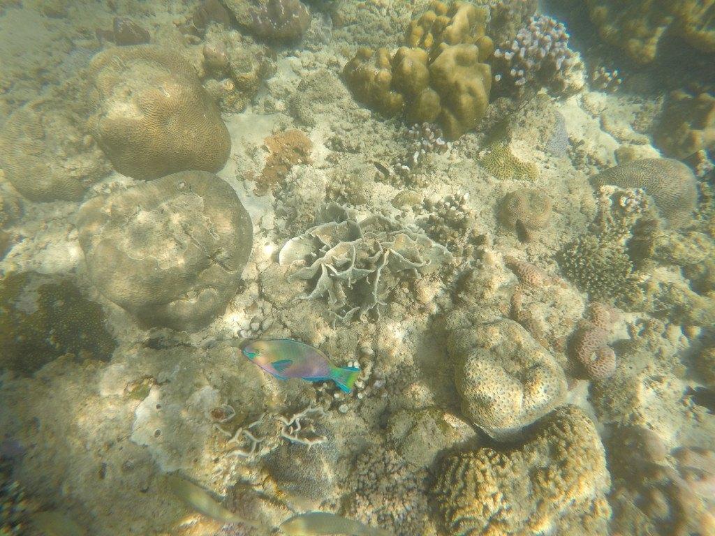 Pretty tropical fish against rocks and coral off Mamutik Island, Kota Kinabalu