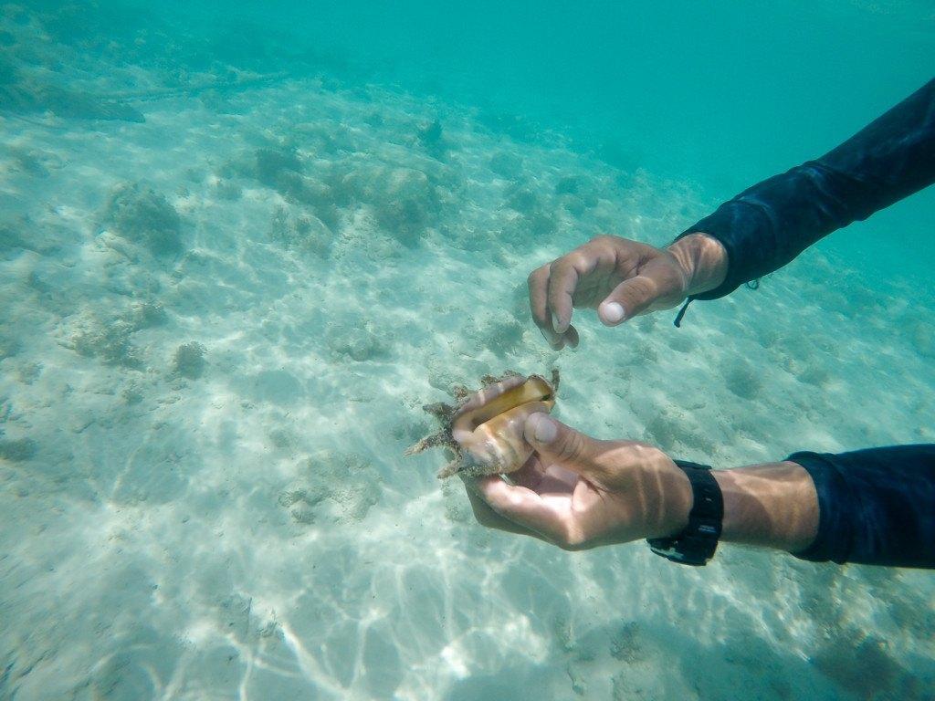 Sea life off Mamutik Island, Kota Kinabalu