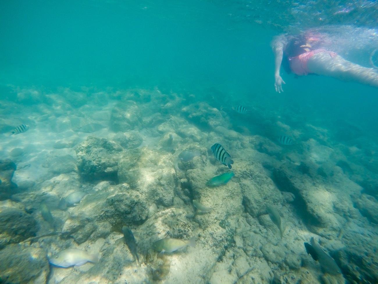 Snorkeling off Mamutik Island in Kota Kinabalu