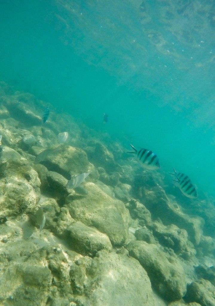 Pretty tropical fish off Mamutik Island, Kota Kinabalu