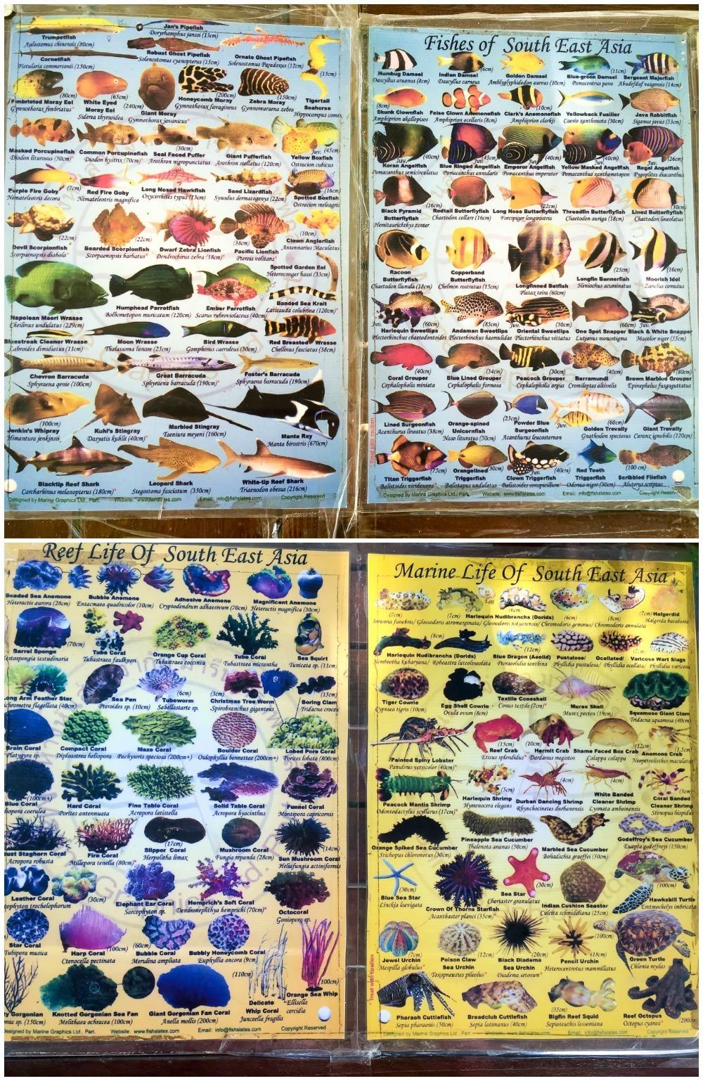 Sea Life of Southeast Asia - Borneo