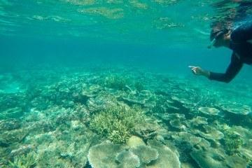 A guided snorkeling tour around Mamutik Island in Kota Kinabalu, Malaysian Borneo