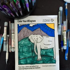 Help Save Elephants by Making an #Elegram