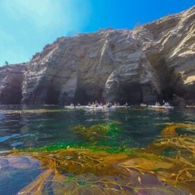 What It's Like to Kayak with Everyday California in La Jolla