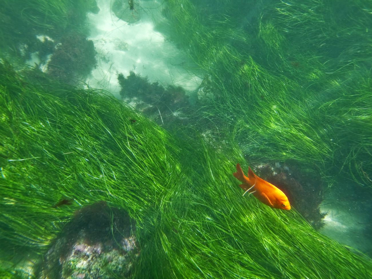 When in San Diego, you must explore La Jolla's Underwater Park ecological reserve. Here's why.