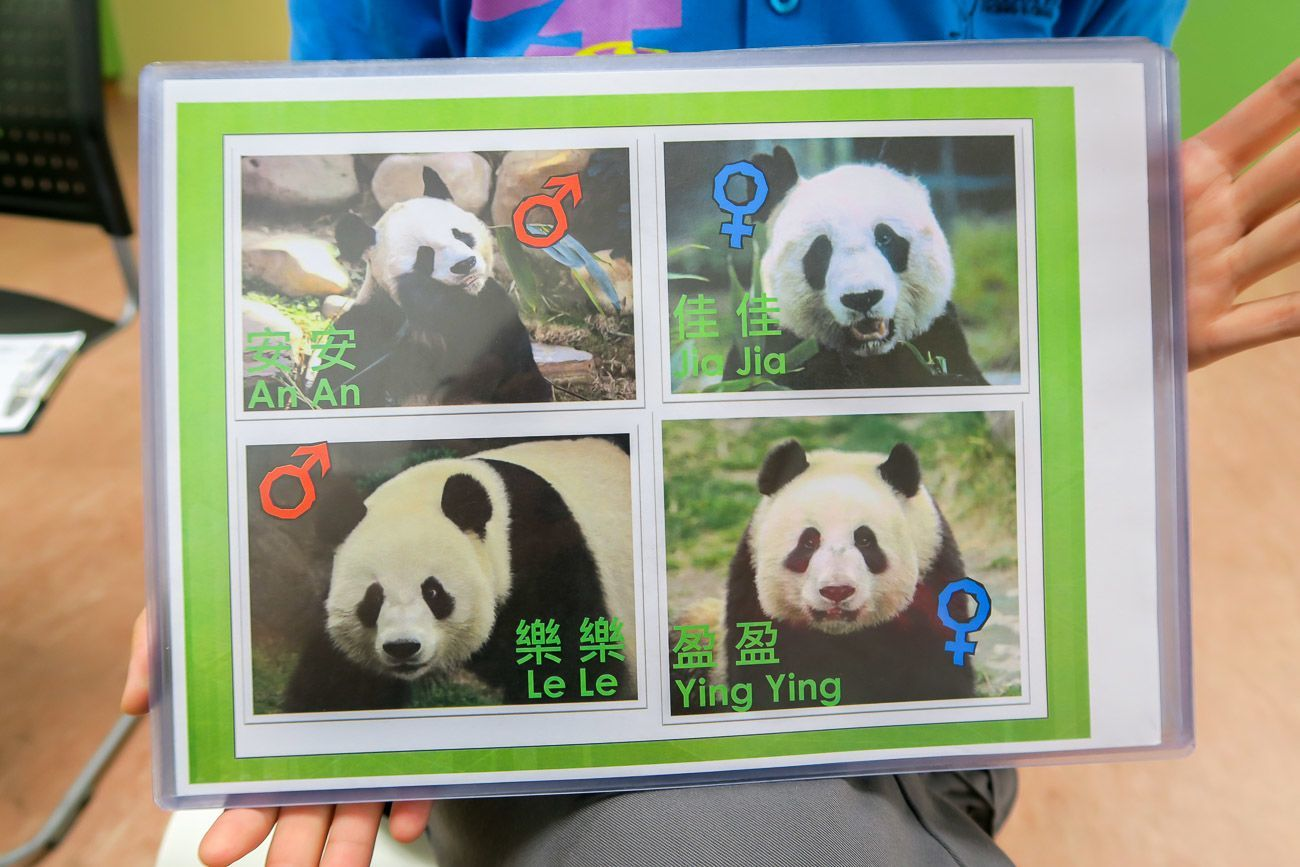 There are four pandas at Ocean Park in Hong Kong. Two are the oldest pandas in captivity.