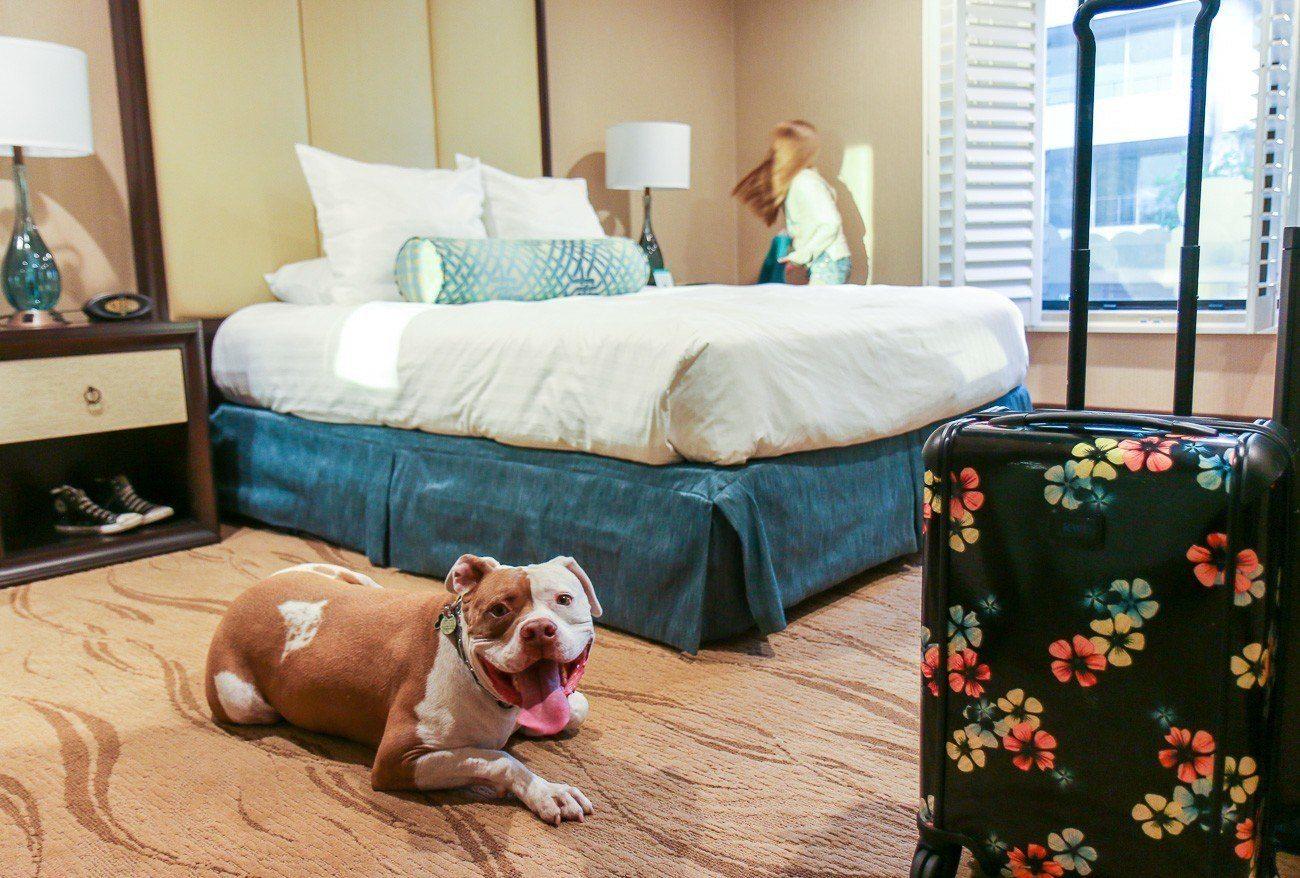 Empress Hotel La Jolla is a pet-friendly San Diego hotel with a fantastic location and nice rooms at a great price.