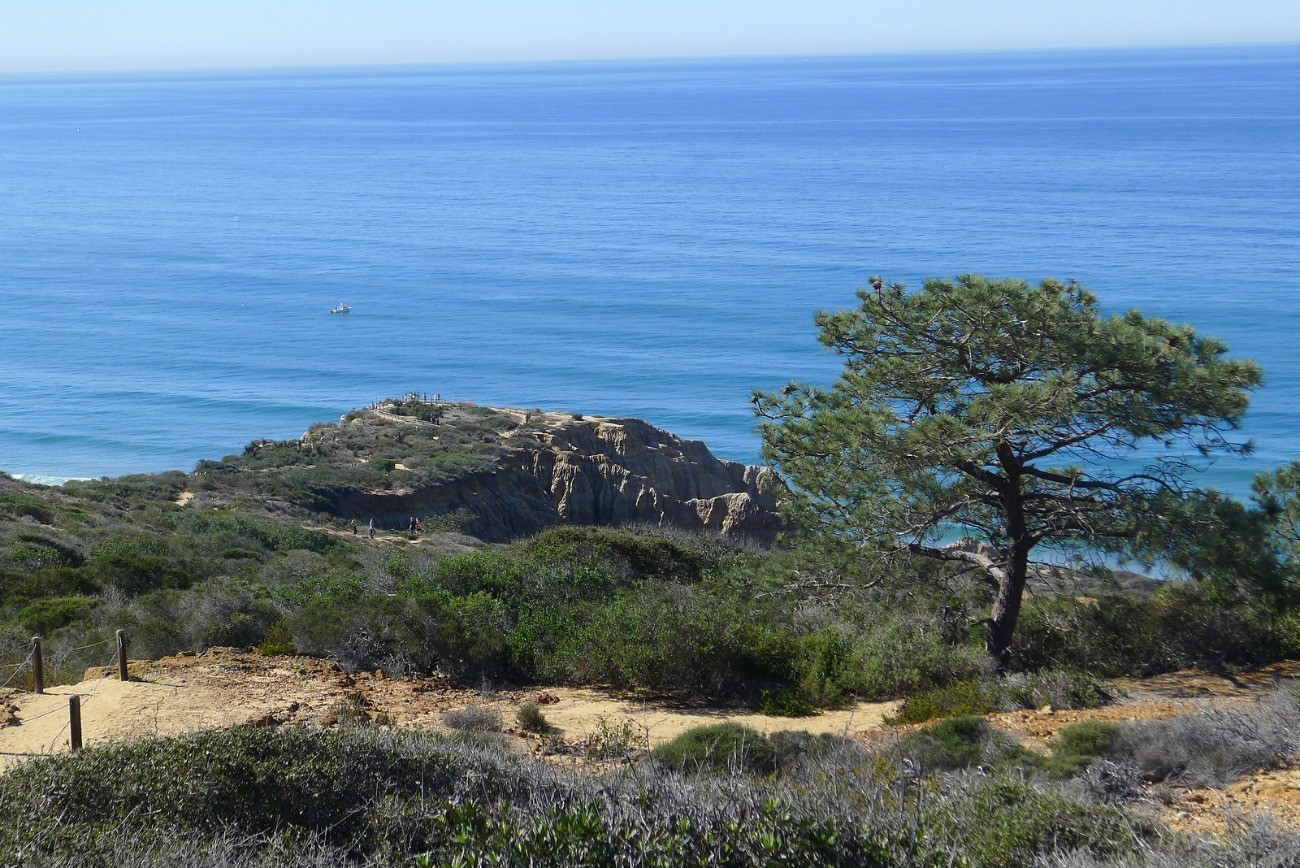Torrey Pines State Reserve is one of La Jolla's best attractions for hikes, walks and ocean views.