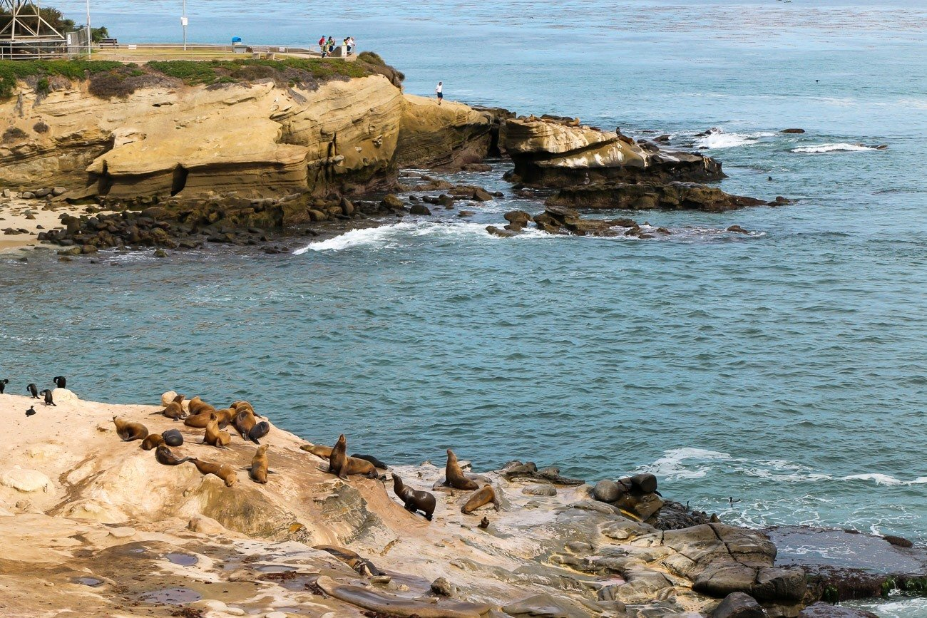 The sea lions resting at La Jolla Cove