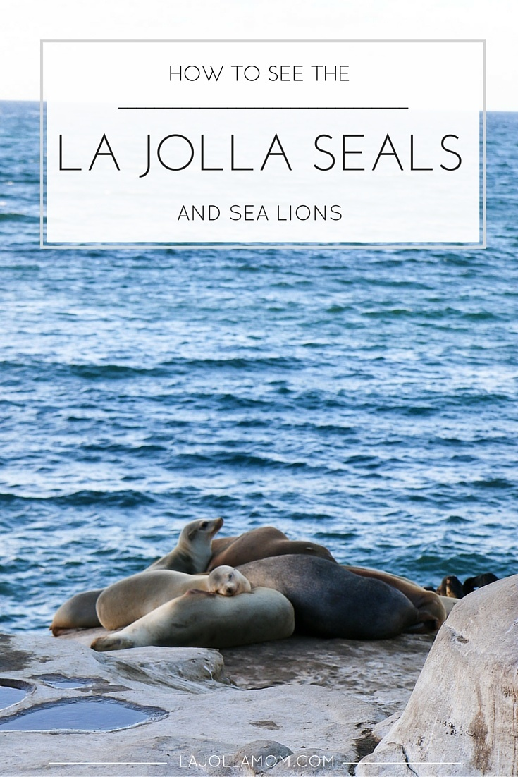 Tips for how best to see the La Jolla seals and sea lions including which beaches to go to and parking.