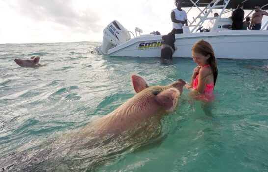 What It's Like to Swim with Pigs in the Bahamas