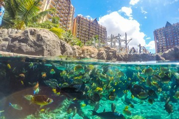 Go snorkeling with thousands of tropical fish in Oahu's only private reef at Aulani, a Disney Resort & Spa.