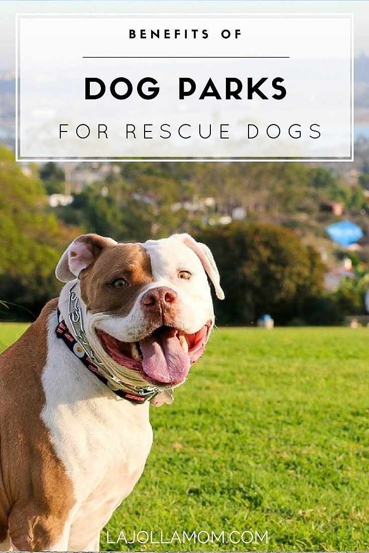 Why dog parks are important to for communities, dog owners and especially rescue dogs.