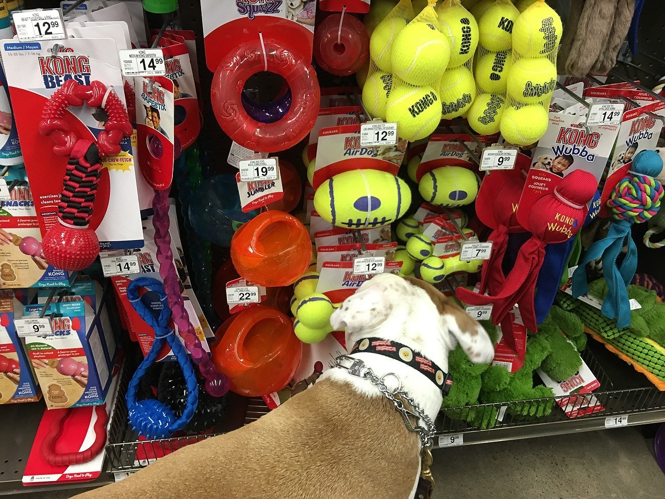 Dog shopping at a Petco store