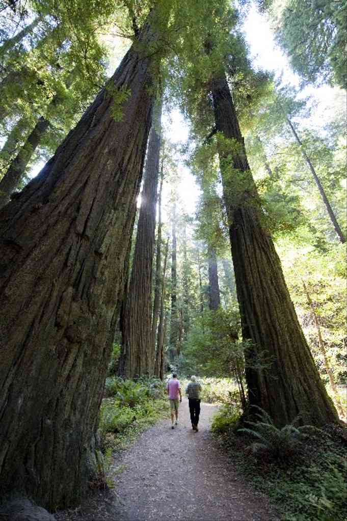 Visit Redwood State Park in California