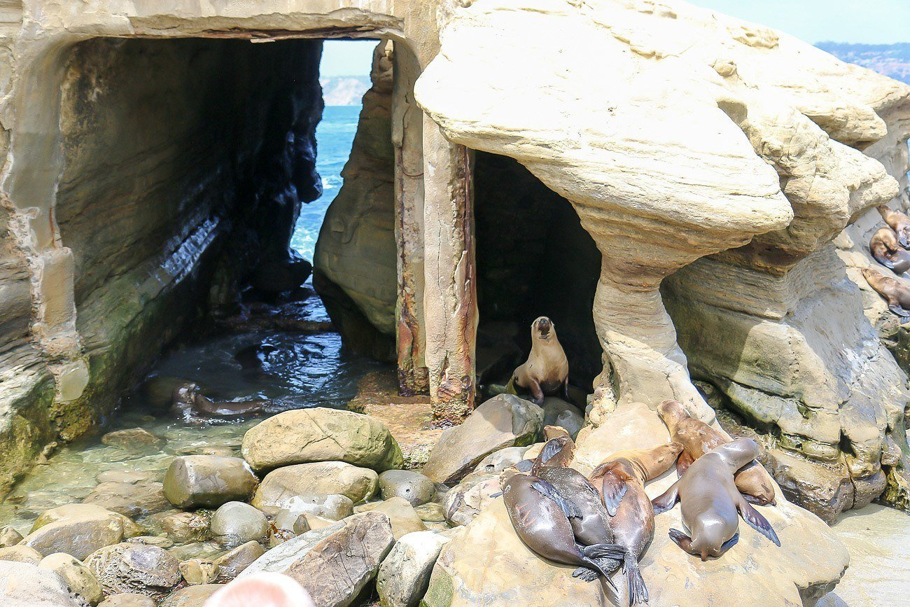 Adorable seals at La Jolla Cove