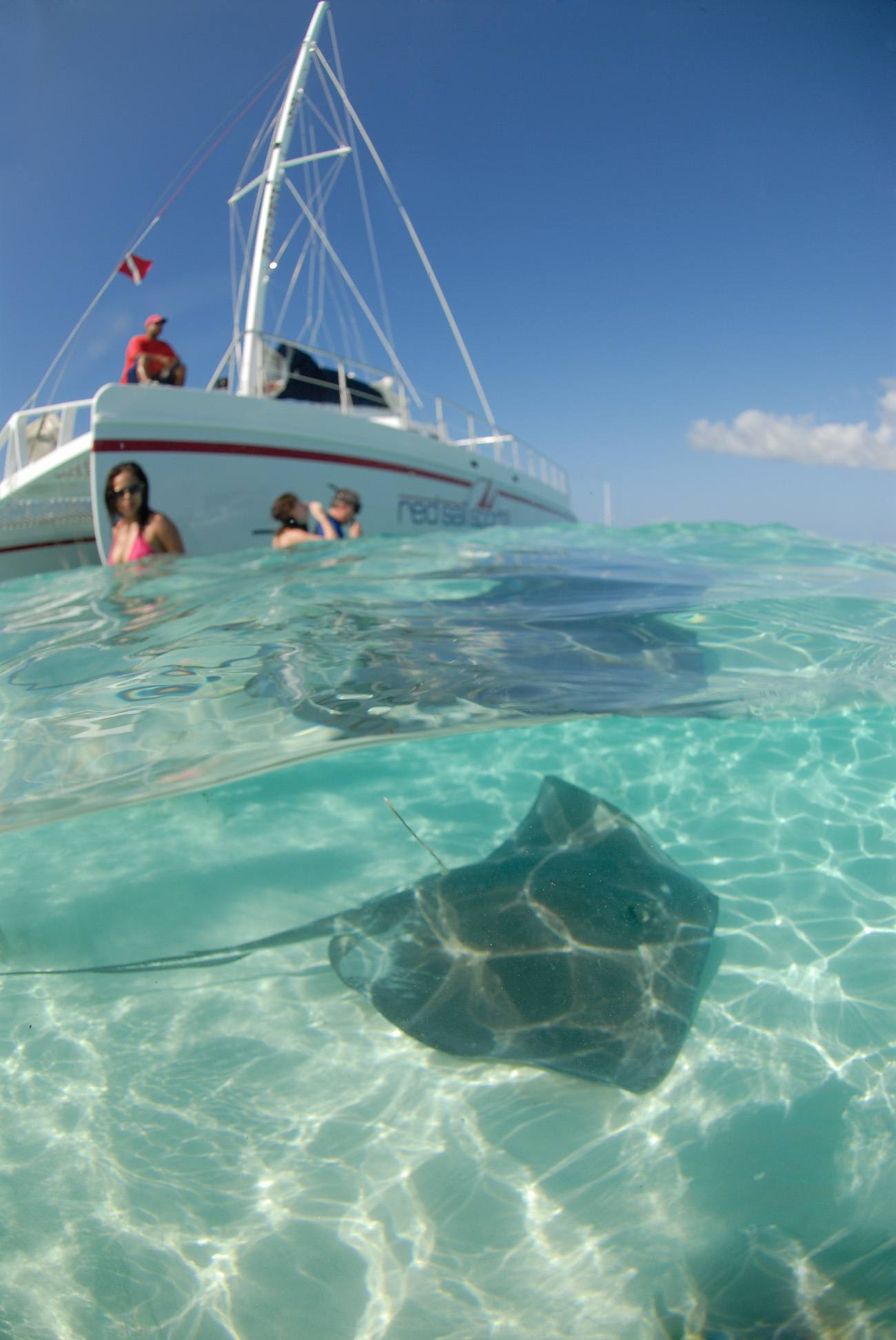 When in Grand Cayman, visit Stingray City. It's a sandbar with water 3-4' deep where you can stand and snorkel with stingrays!