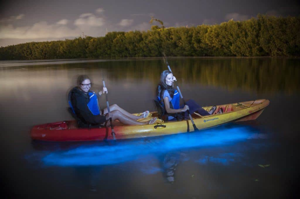 Kayakers glide through the bioluminescent bay at night.