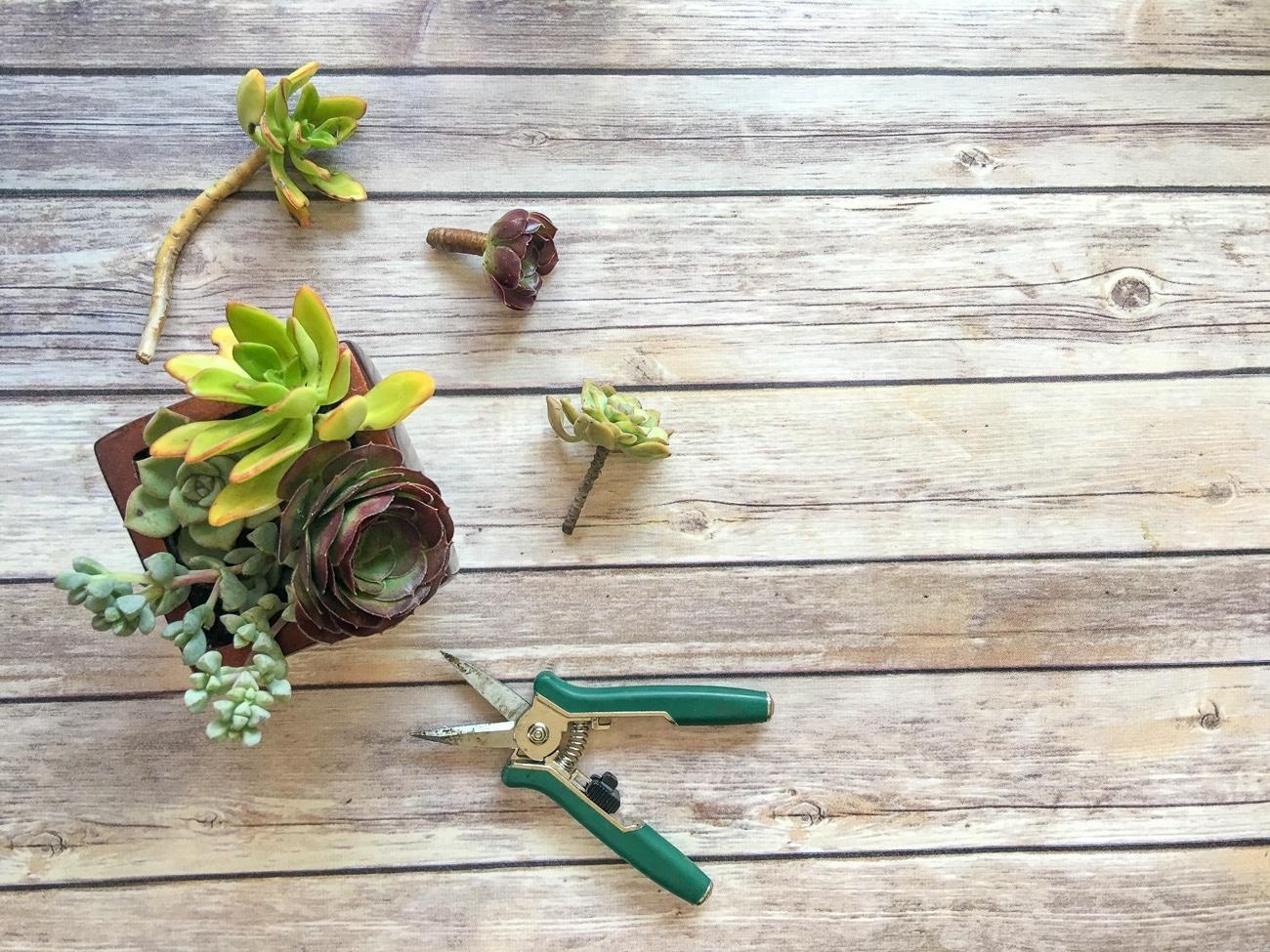 An easy DIY succulent planter