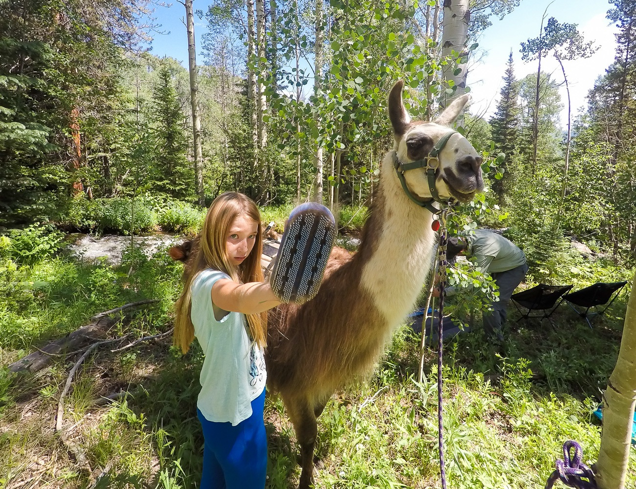 Brushing a llama during a picnic and trek with Paragon Guides in Vail, Colorado.