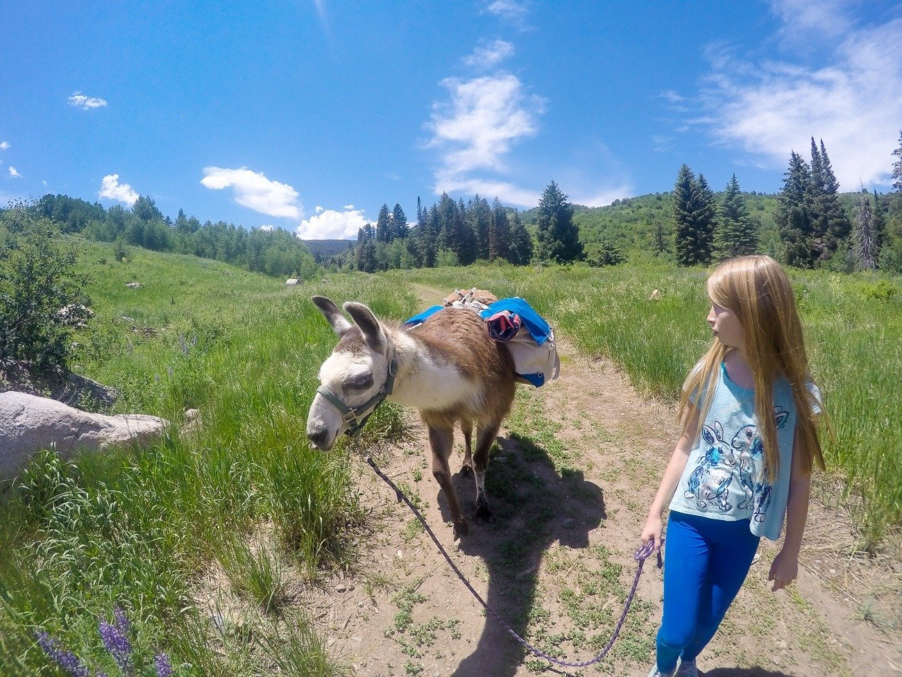 Llama picnic with Paragon Guides in Vail, Colorado