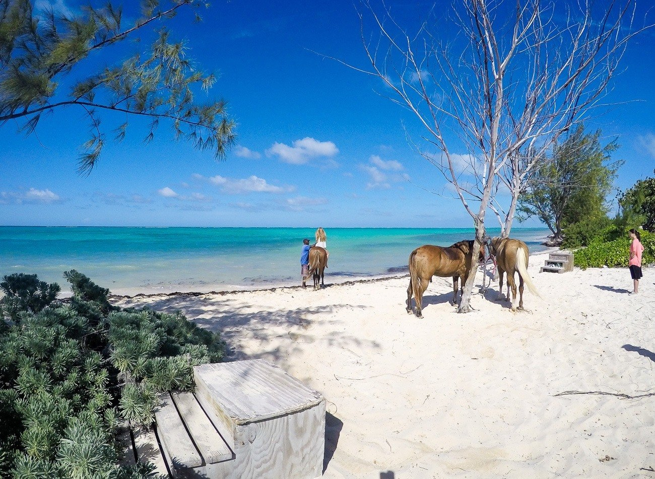 Take a horseback riding and swimming tour in the Cayman Islands with Pampered Ponies