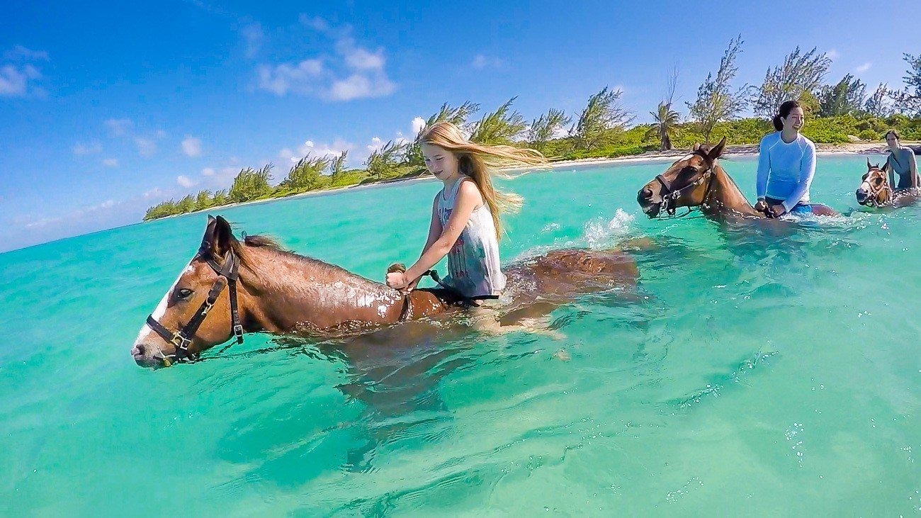 What It S Like To Ride Swimming Horses In Grand Cayman
