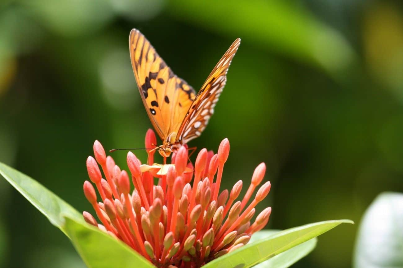 There are over 60 species of butterflies that live on Grand Cayman. Five are endemic.