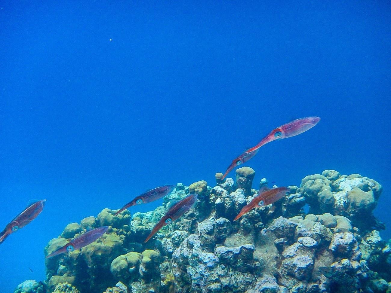 Fish swimming underwater caught by my daughter's underwater camera.