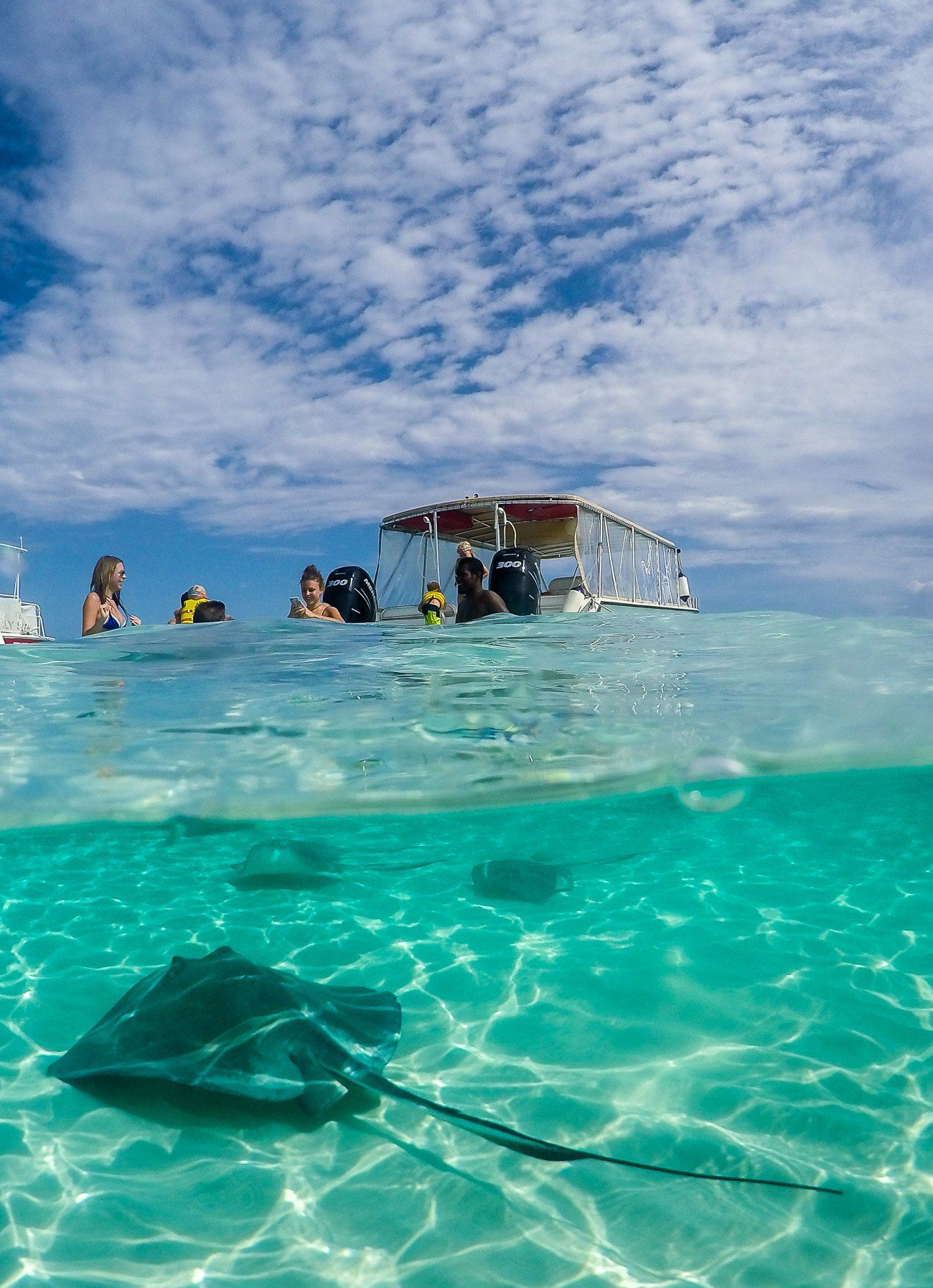 stingray city is a great thing to do in grand cayman with kids or without