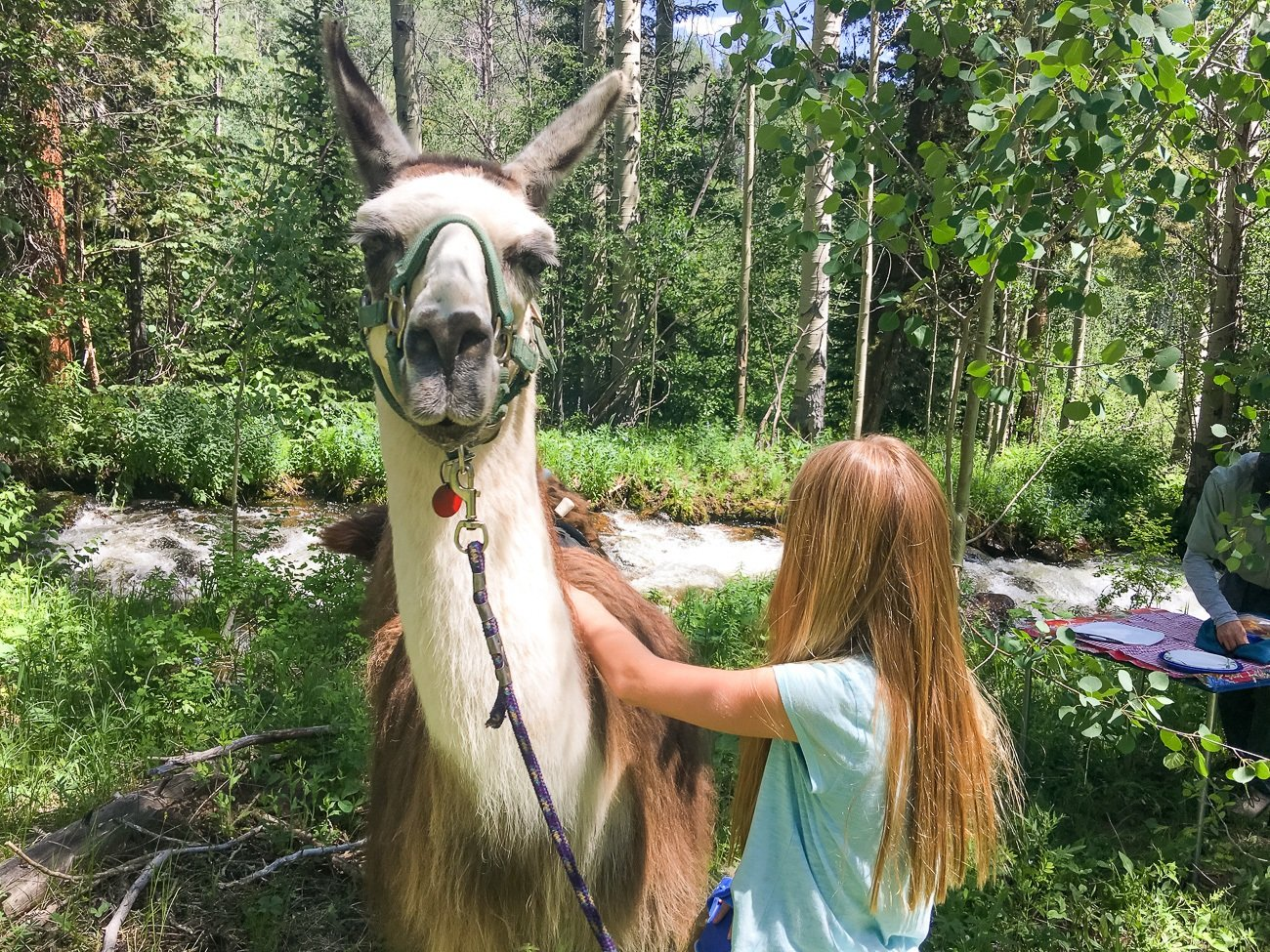 Llama trekking with Paragon Guides is a great thing to do with kids in Vail, Colorado