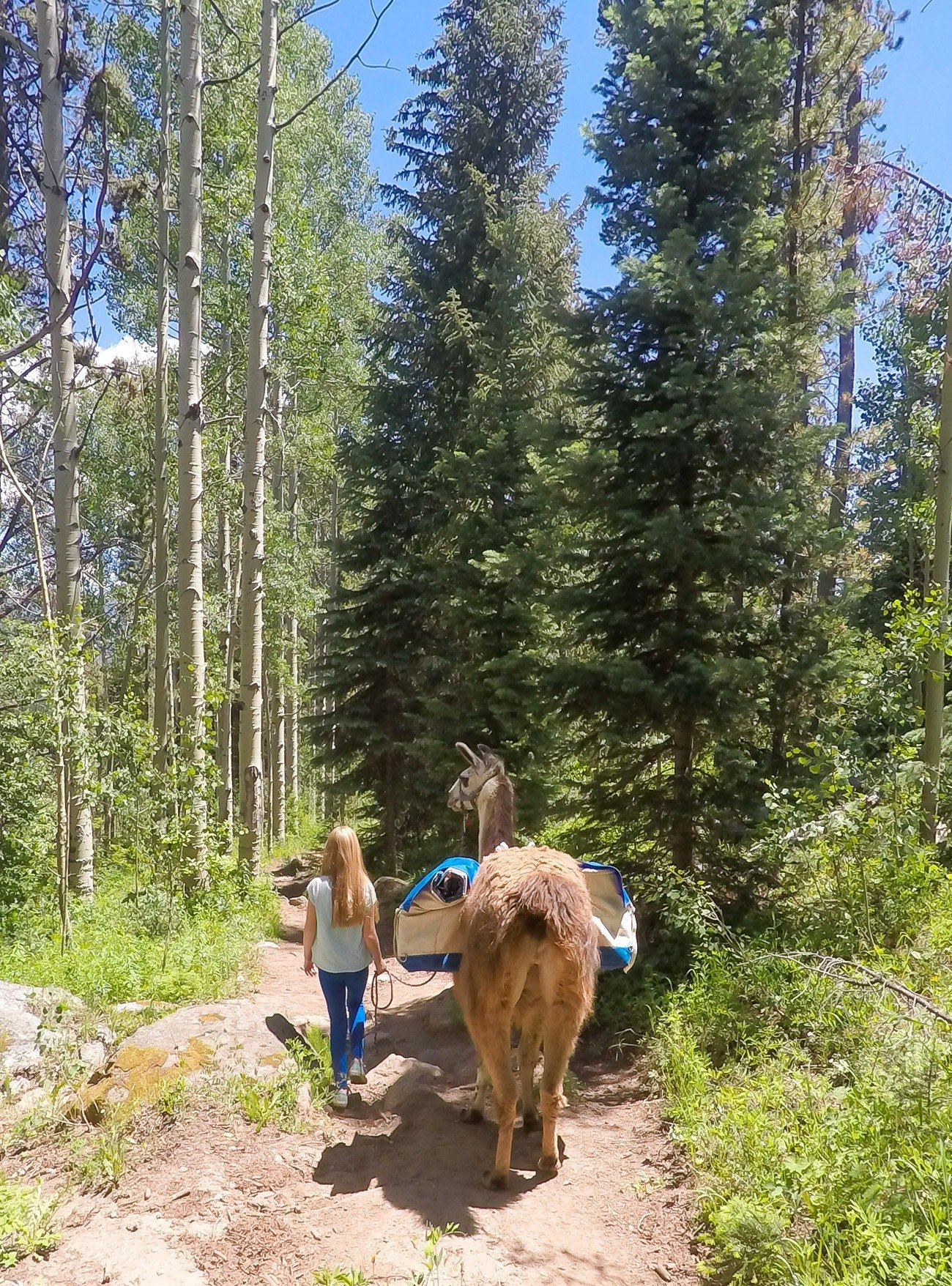 A great thing to do in Vail, Colorado? Go trekking and have lunch with a llama. Yes!