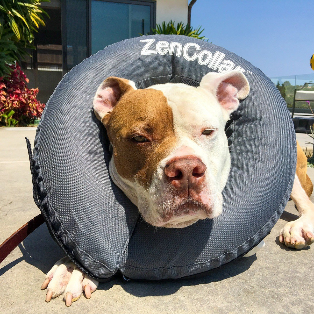 Alternatives to the e-collar (cone of shame) for dogs include a blow-up ring (did not work for us).