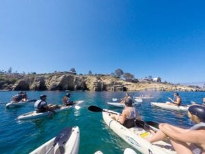 A discount for kayak tours and kayak rentals with Everyday California in La Jolla.