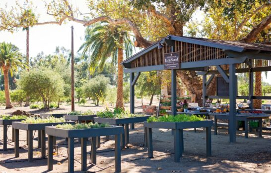 Shop the Golden Door's NEW Organic Farm Stand