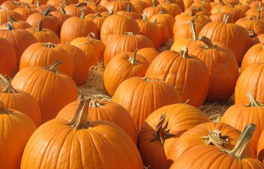 San Diego Chefs Dish Pumpkin Tips