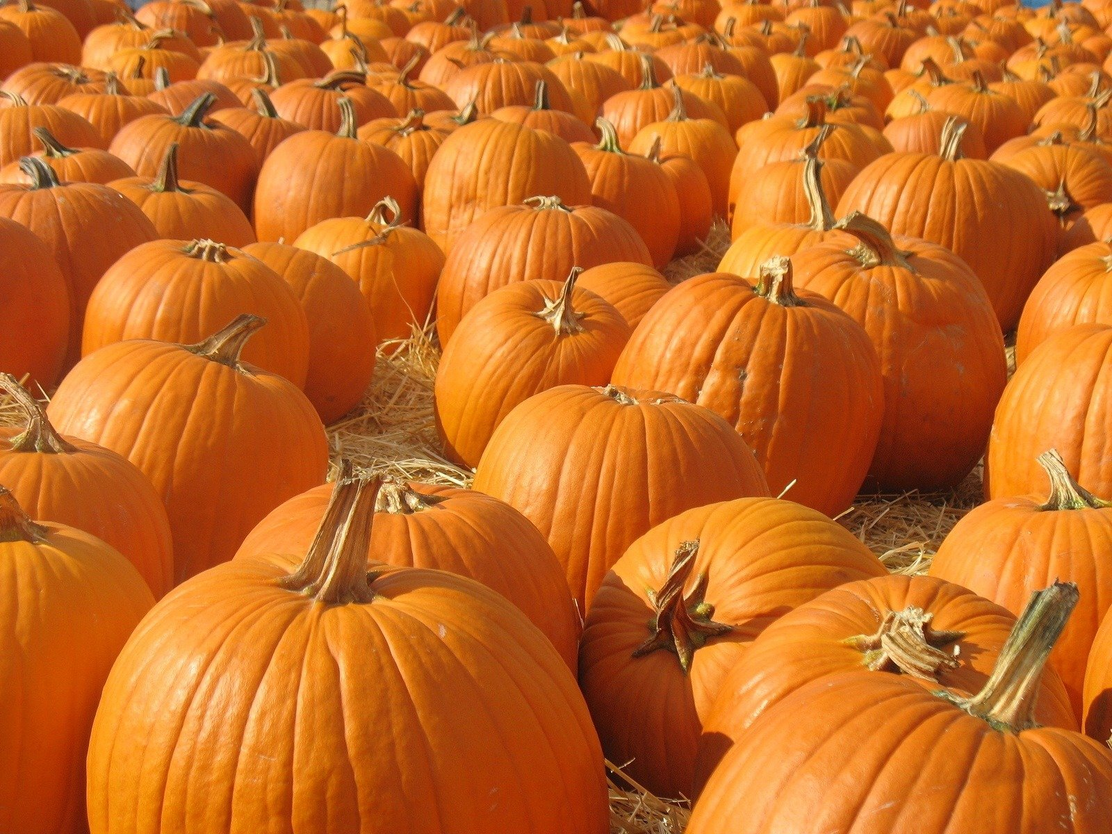 Pumpkin Tips From San Diego Chefs La Jolla Mom