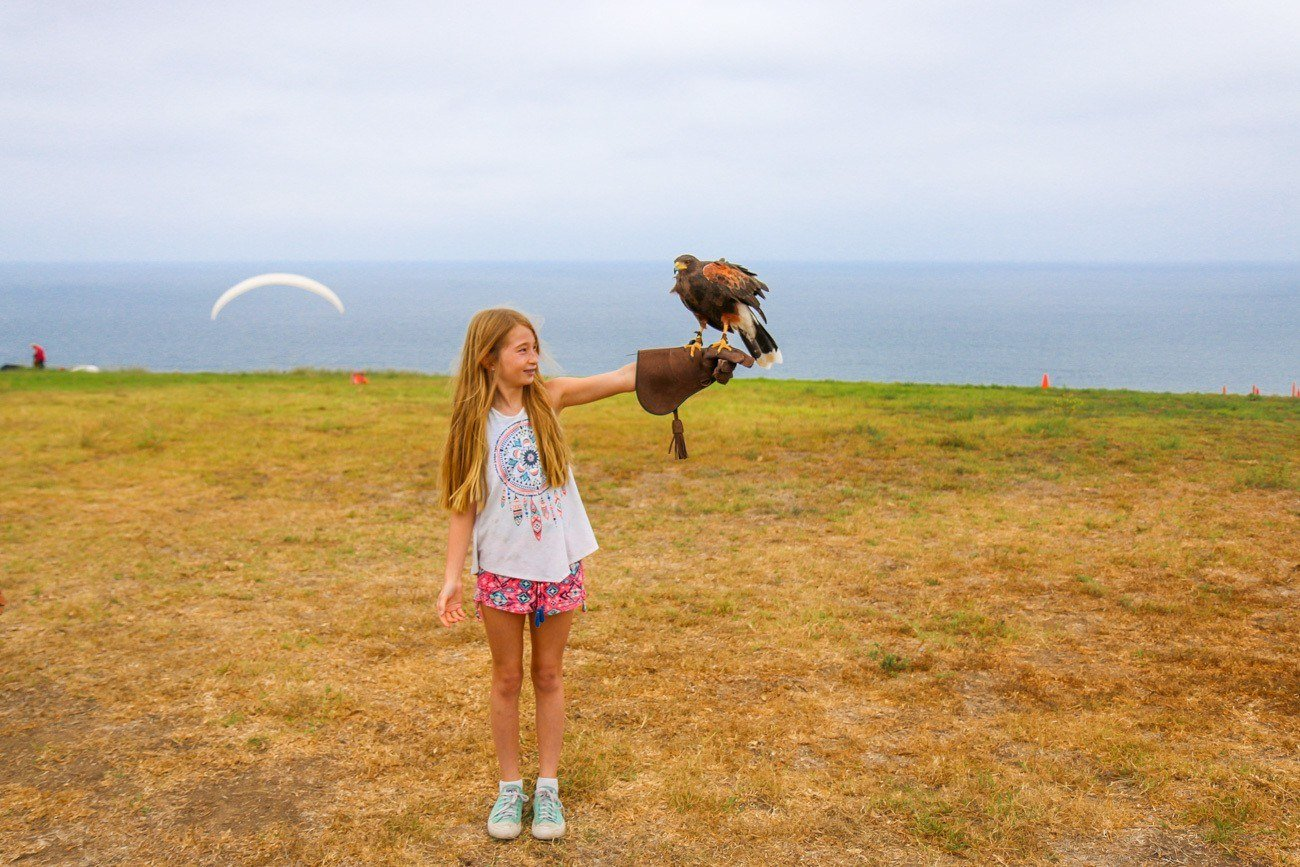 A photo with a Harris's hawk during a Sky Falconry lesson in La Jolla.
