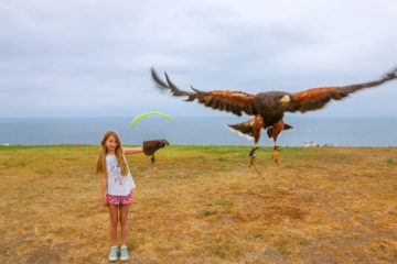 A basic falconry lesson with Sky Falconry is an awesome thing to do with kids in San Diego at La Jolla's Torrey Pines Gliderport.